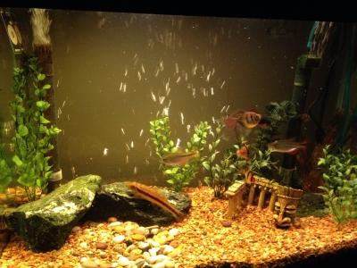 Our Aquarium